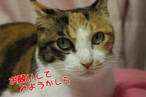IMG_5777編集②.jpg