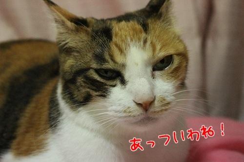 IMG_5778編集②.jpg