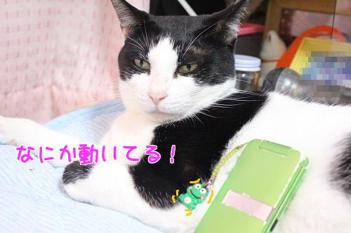 IMG_6436編集②-1.png