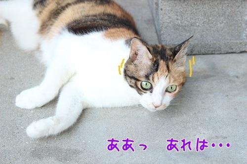IMG_6668編集②.jpg