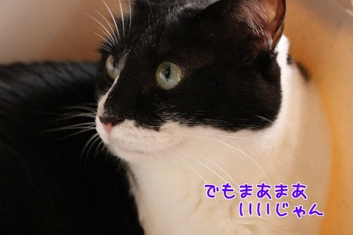 IMG_7091編集②.jpg