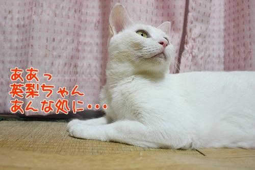 IMG_8125編集②.jpg