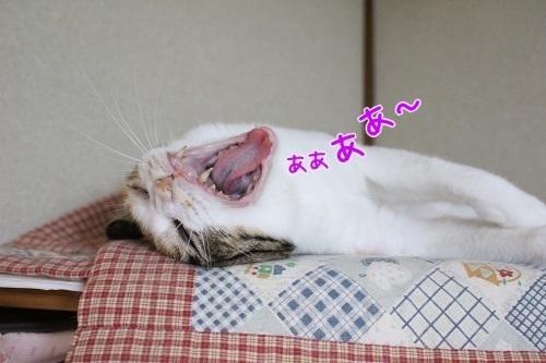IMG_8145編集②.jpg