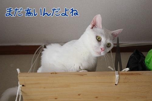 IMG_8333編集②.jpg