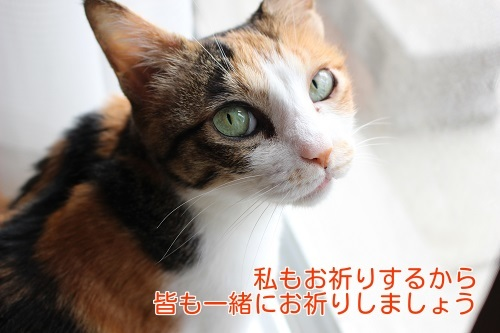 IMG_8556編集②.jpg
