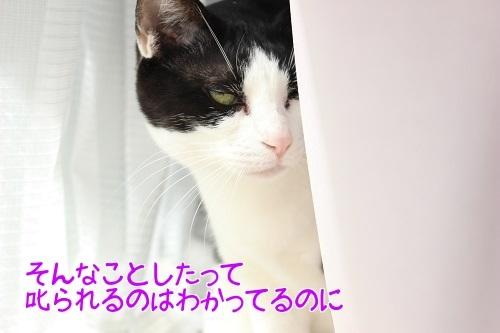 IMG_8789編集②.jpg