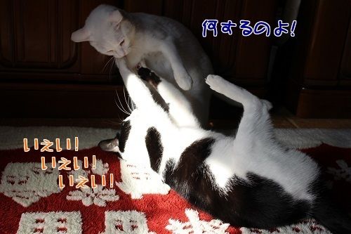 IMG_9097編集②.jpg