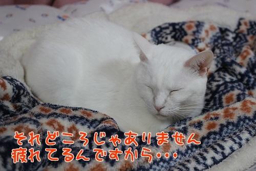 IMG_9905編集②.jpg
