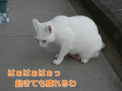 P1060142編集②.jpg