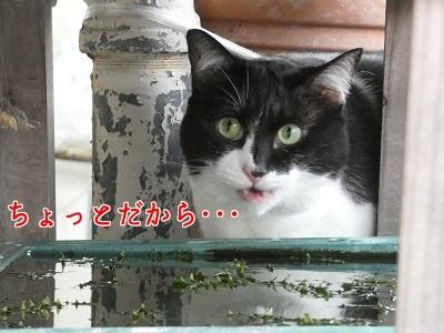 P1070274編集②.jpg