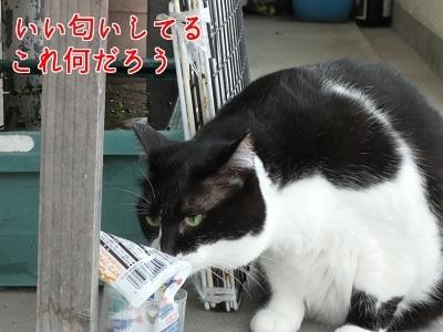 P1070280編集②.jpg