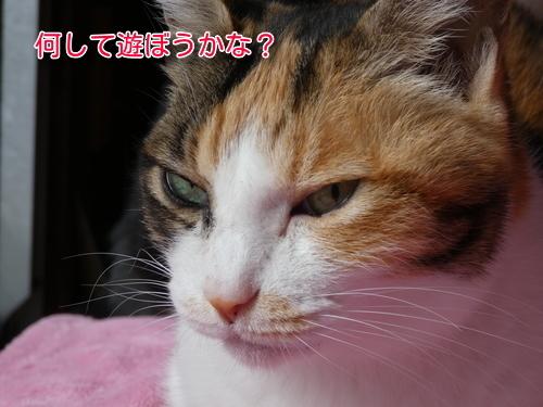 P1090305編集②.jpg
