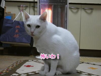 P1100848編集.jpg