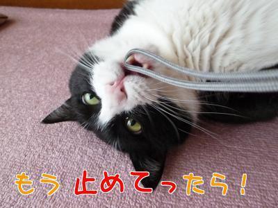 P1200115編集②.jpg