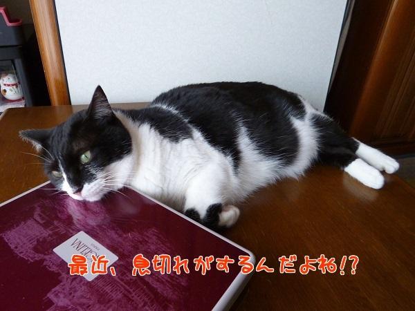 P1320114編集②.jpg