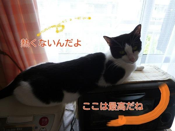P1320154編集②.jpg