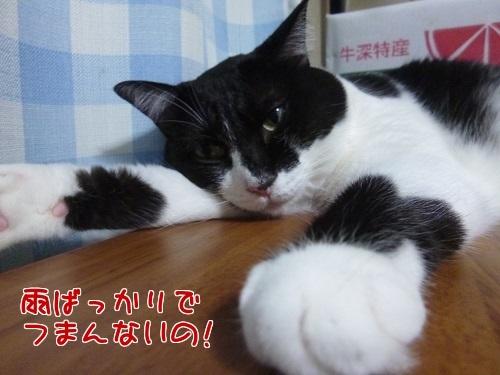 P1480953編集②.jpg