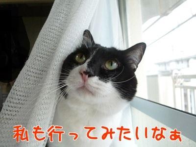 P1520016編集②.jpg