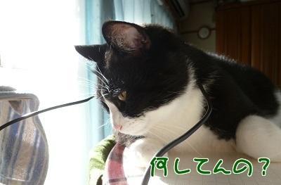 P1520082編集②.jpg