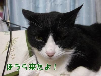 P1520594編集②.jpg