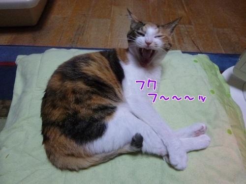 P1540438編集②.jpg