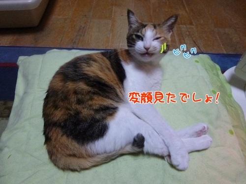 P1540439編集②.jpg