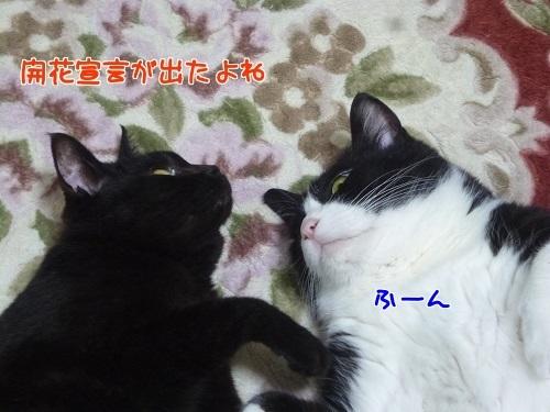 P1540631編集②.jpg