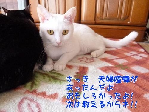 P1590475編集②.jpg