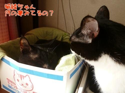 P1620110編集②.jpg