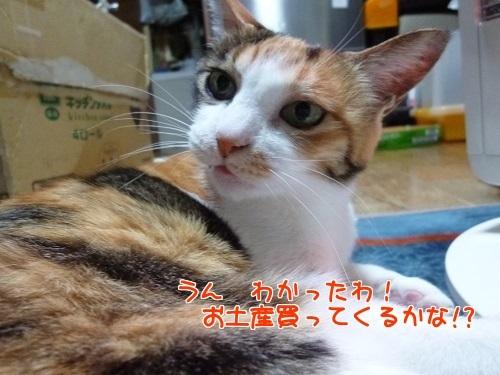 P1750200編集②.jpg