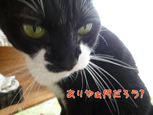 P1760948編集②.jpg