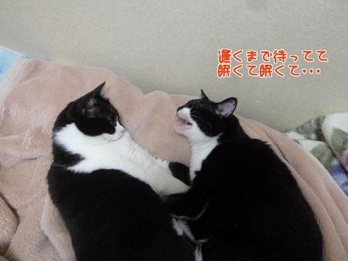 P1780144編集②.jpg