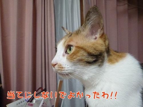 P1780926編集②.jpg