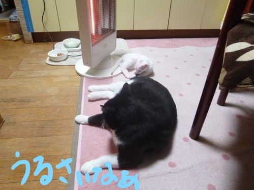 P1850535編集②.jpg