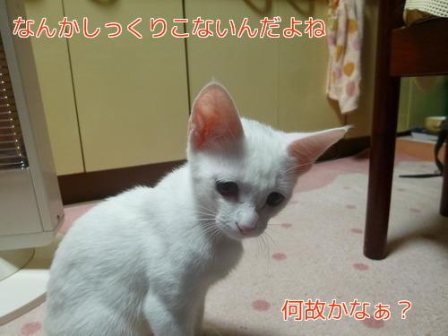 P1860359編集②.jpg