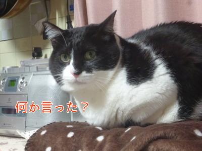 P1870360編集②.jpg