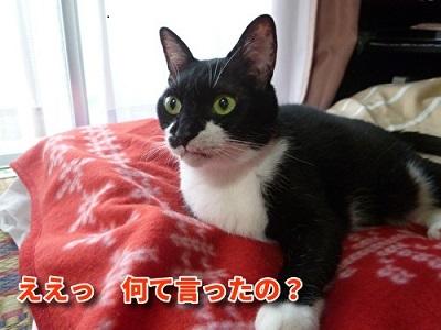 P1940169編集②.jpg